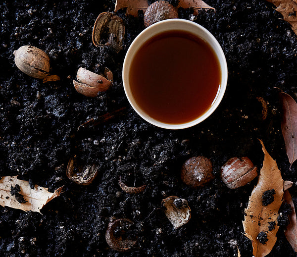 Complete Guide to Ancient Pu-erh Tea for Beginners