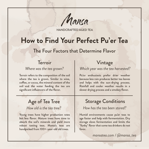 Mansa Handcrafted Aged Tea | How to find your perfect pu-erh tea | understanding pu-erh | what is pu-erh tea | factors that influence quality of pu-erh tea | how does terroir impact pu-erh tea? | why does the age of tea trees matter for pu-erh tea? | how do you store pu-erh tea cake | vintage and pu-erh tea