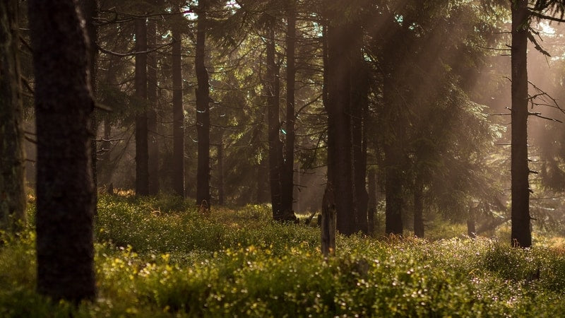 Forest with grass and sunshine