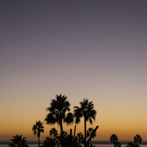 Los Angeles Palms_3