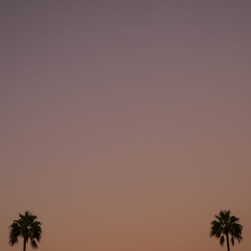 Los Angeles Palms_1