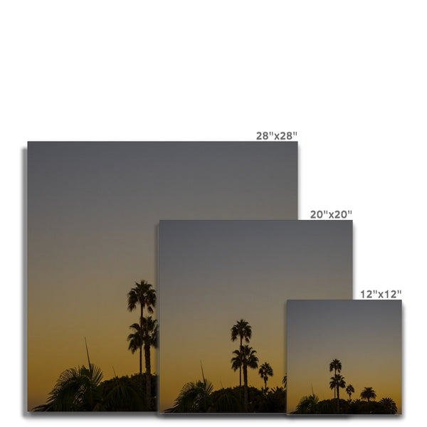 Los Angeles Palms_2 Canvas