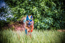Laden Sie das Bild in den Galerie-Viewer, Holi Hundefotoshooting Explotion - Hundefotografie