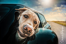 Laden Sie das Bild in den Galerie-Viewer, Hunde Fotoshooting Dogs & Cars