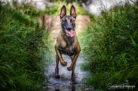 "Hundeshooting Outdoor ""Waterline"" - Hundefotograf"