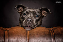 Laden Sie das Bild in den Galerie-Viewer, Hundeshooting - Schnappi + Studioshooting