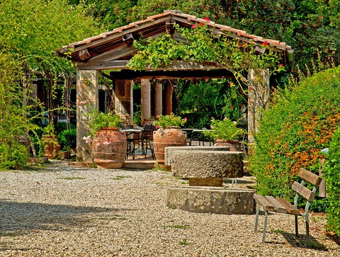 The pergola densely overgrown with climbing plants
