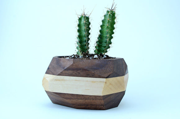geometric,cactus,succulent,planter,pot,handmade,wood,iron,roots,design