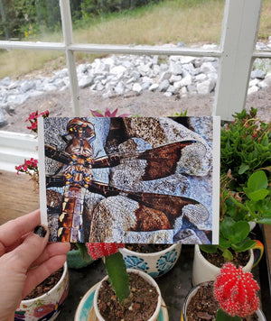 Dragonfly Salvation Message 5x7 card - Pack of 10