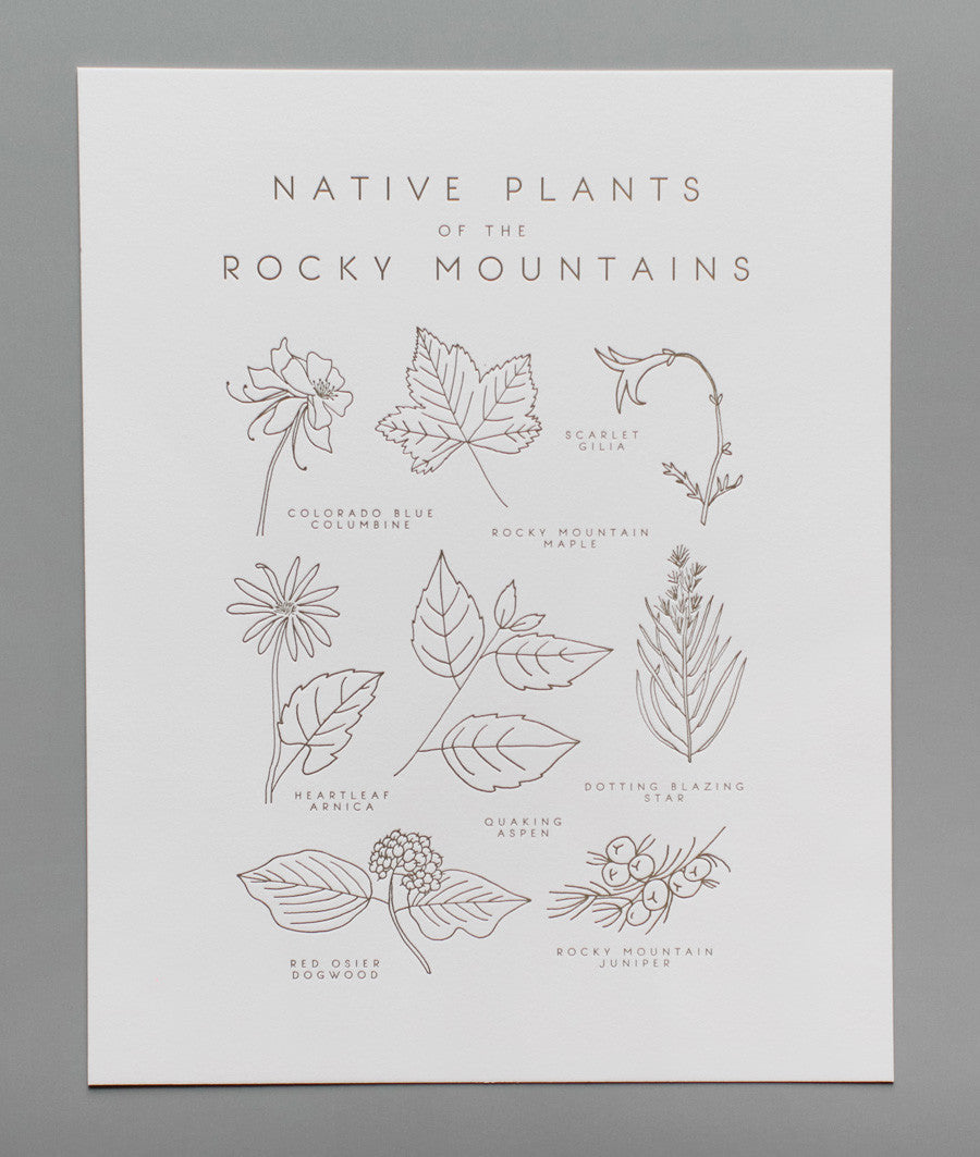 native plants of the rocky mountains print - www.mignonshop.com - 3