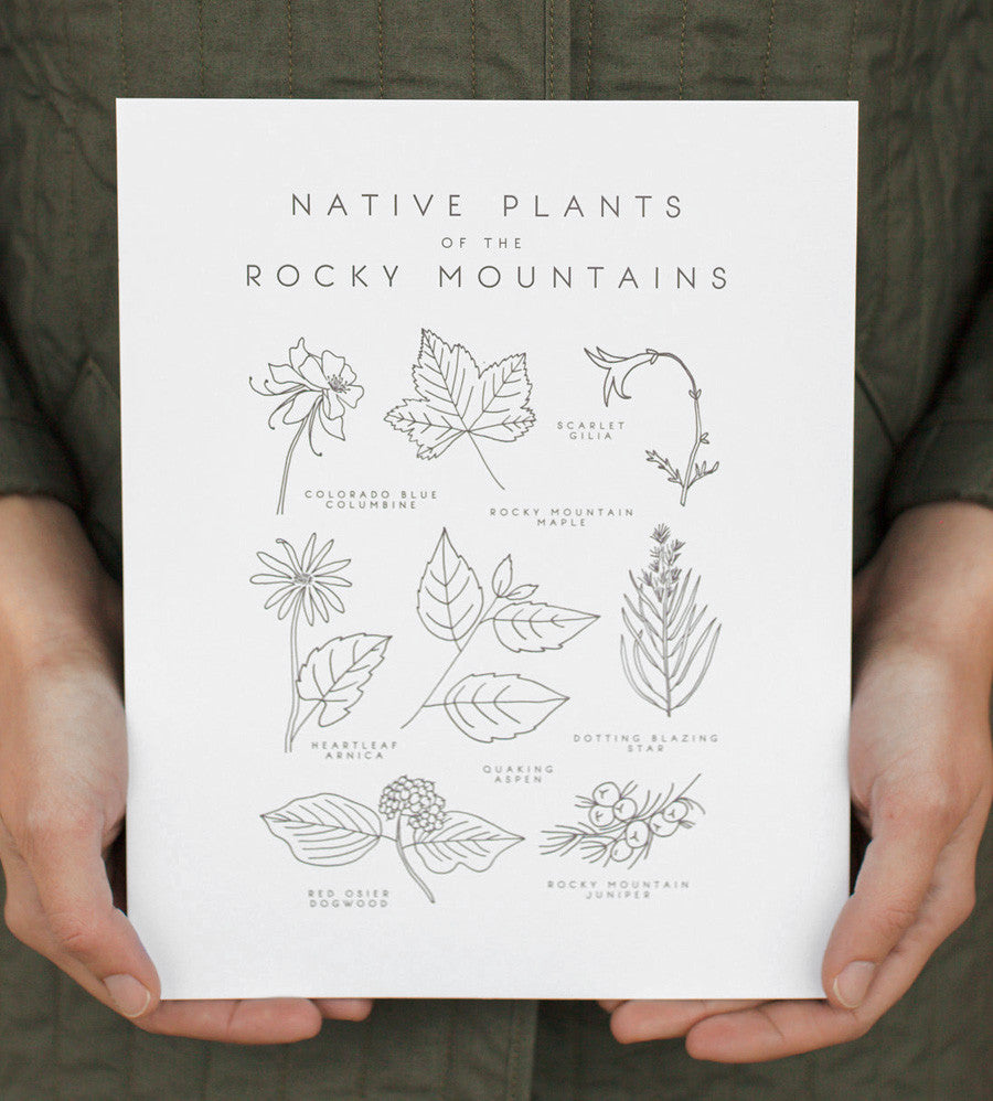 native plants of the rocky mountains print - www.mignonshop.com - 1