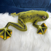 Tabarius, Tree Frog, Adoptable
