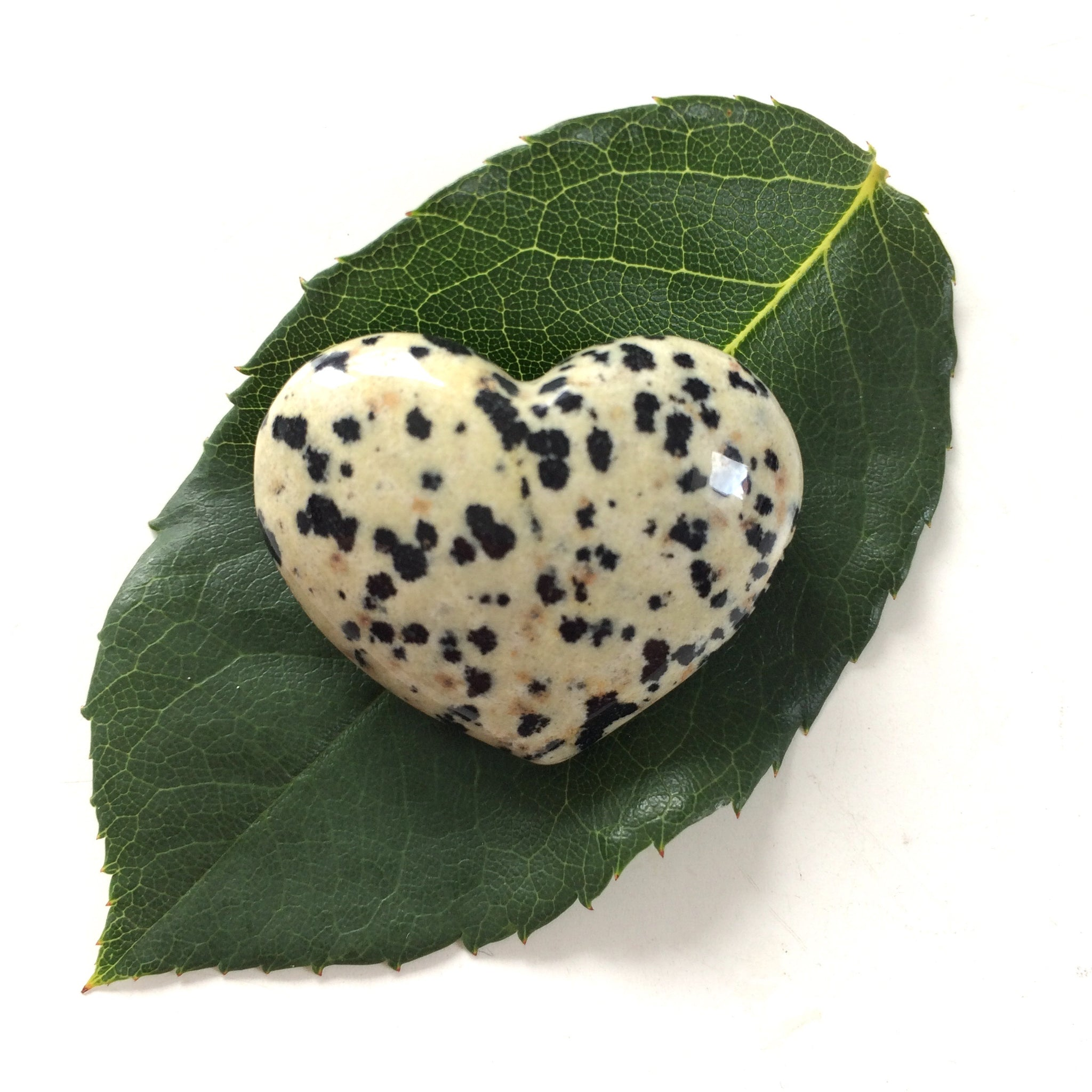 Dalmation Jasper heart shaped smooth palm stone pocket healing 30mm