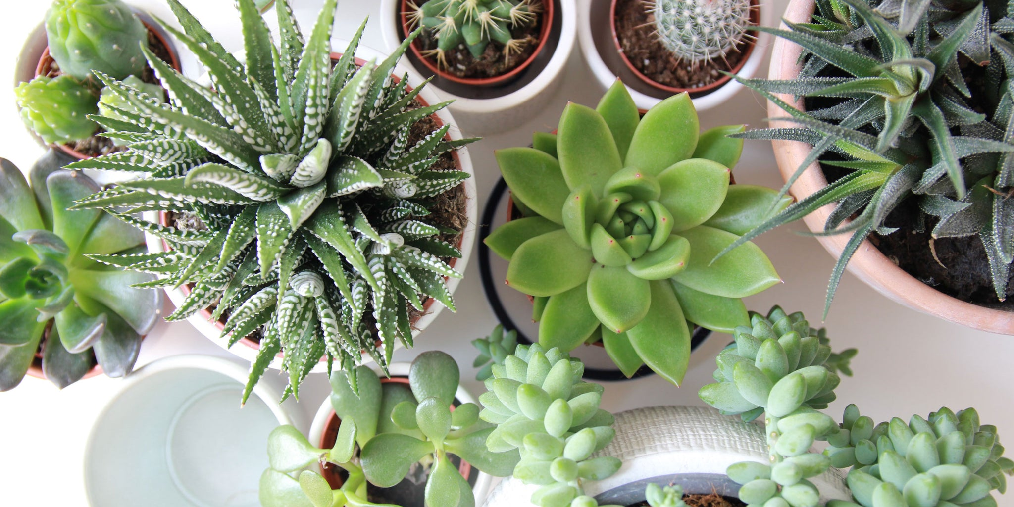 5 Galentine's Day Gift Ideas for 2021 (For Galentine's Near or Far) Plant Babies | Patio Essentials