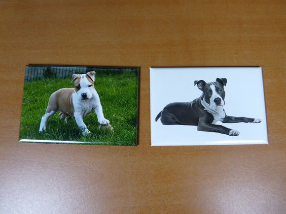 lot 2 Magnets  aimant 7,8 cm X 5,3 cm CHIENS CHIOTS American Staffordshire 21/22