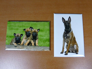 lot 2 Magnets / aimant 7,8 cm X 5,3 cm CHIENS CHIOTS MALINOIS berger belge 16/17