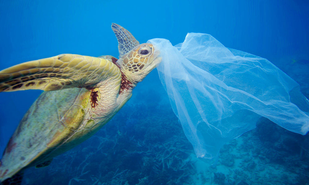 beach-cleaning-eco-wheat-straws-plasticfree-planet-within-one-generation-turtle-with-plastic-bag-eco-friendly