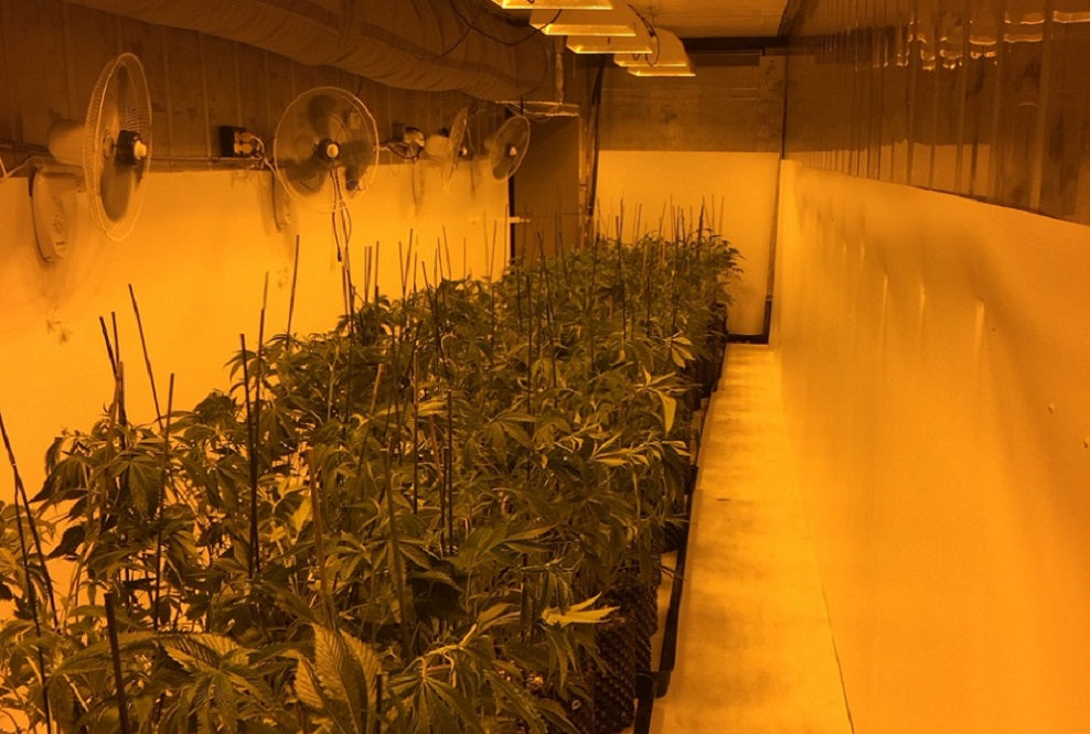</p>Compare Grow Room Wall Coverings: Mylar vs. White Paint vs. Vinyl GrowWall™