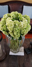 Load image into Gallery viewer, Minigreen Lime Hydrangea $2.72 x stem  40 stems x box