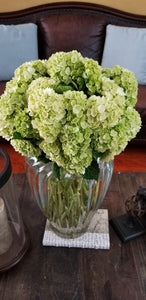 Minigreen Lime Hydrangea $2.72 x stem  40 stems x box