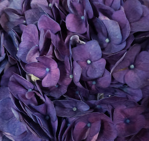 Jumbo Purple Hydrangea $8.90 x stem  10 stems x box