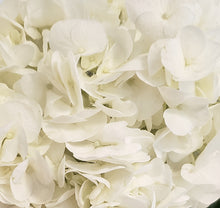 Load image into Gallery viewer, Premium White Hydrangea $3.29 x stem 30 stems x box