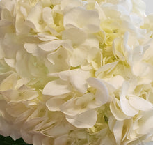 Load image into Gallery viewer, Select White Hydrangea $2.80  x stem  35 stems x box