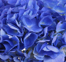 Load image into Gallery viewer, Select Shocking Blue Hydrangea $4.10  x stem  35 stems x box