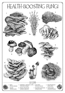 """Health-Boosting Fungi"" Medicinal Mushrooms Giclée Fine Art Print on Bamboo - Gnostic Forest Art"