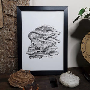 """Oyster Mushroom"" Pen and Ink Mushroom Recycled Print - Gnostic Forest Art"