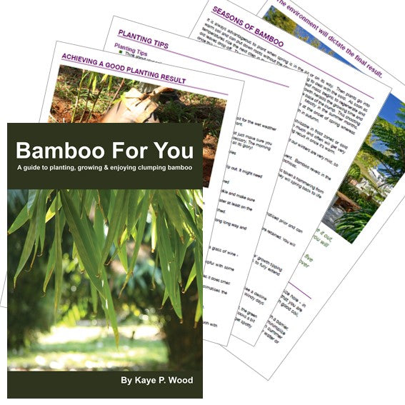 BAMBOO FOR YOU eBook by Kaye P Wood