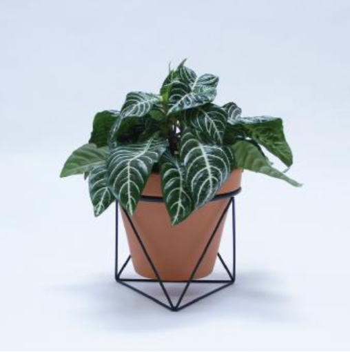 Octahedron Ring Planter - Short