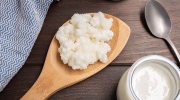 What are milk kefir grains? And where to find them?