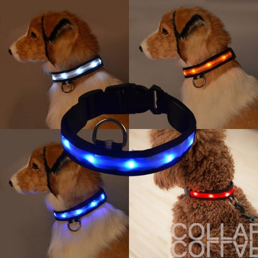 LED Pet Safety Collar - Chargeable!