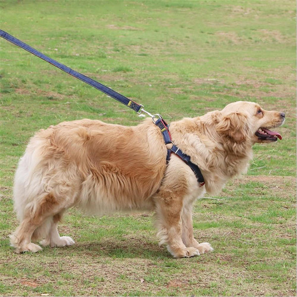 Cowboy Harness & Leash Set - FarmCityPets
