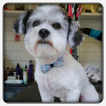 Doggy Bow Ties - 100 PCS! Bulk Bows