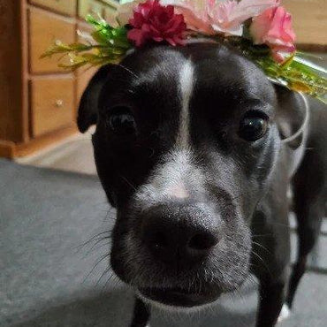 Gorgeous Pet Flower Crown 🌸 Fits Small - X Large Doggos