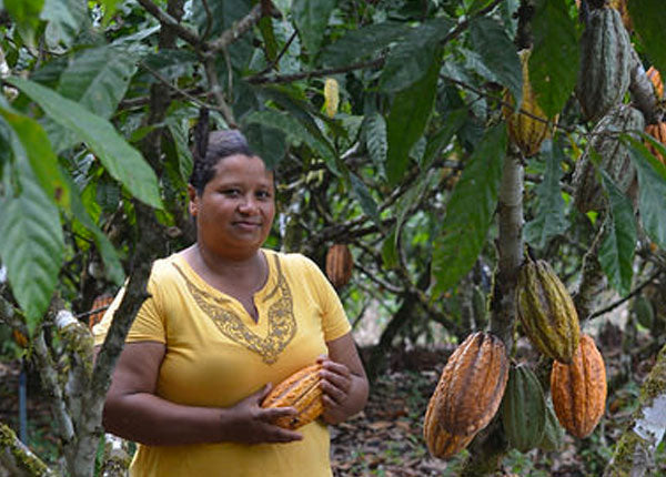 Fine Flavored Cacao of Ecuador  –  Among the World's Best Chocolate