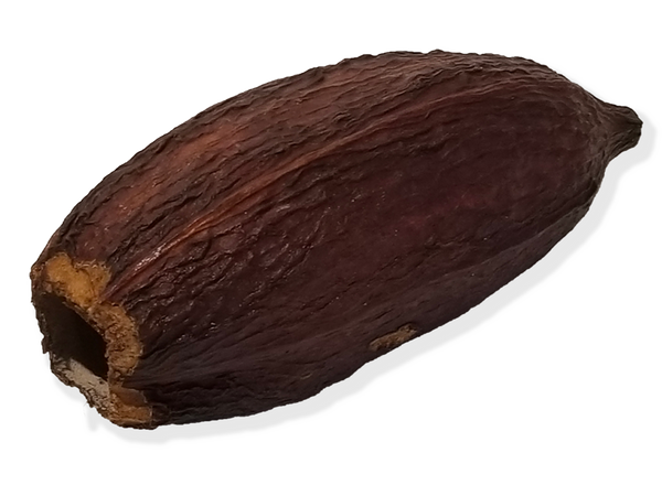 Cacao Pod Dried—Whole