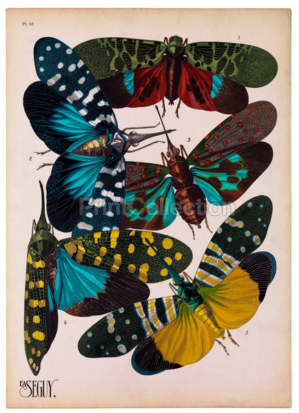 Insects, Plate 16 by E.A. Seguy