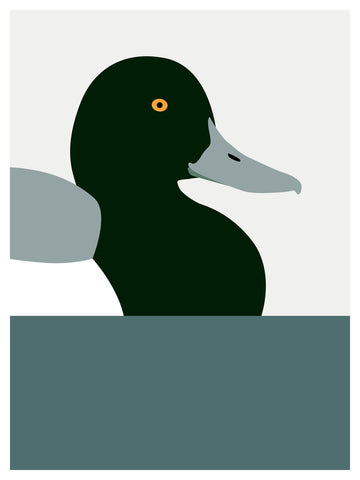 Duck, Greater Scaup