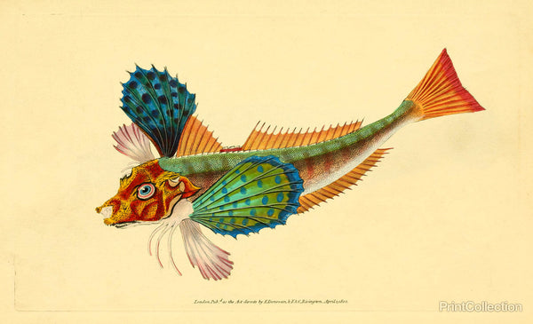 The Natural History of British Fishes - Plate 1