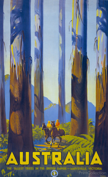 Australia,  The Tallest Trees in the British Empire