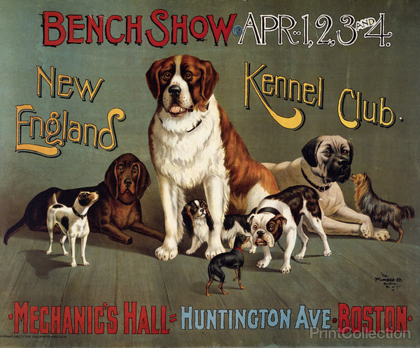 Bench Show. New England Kennel Club