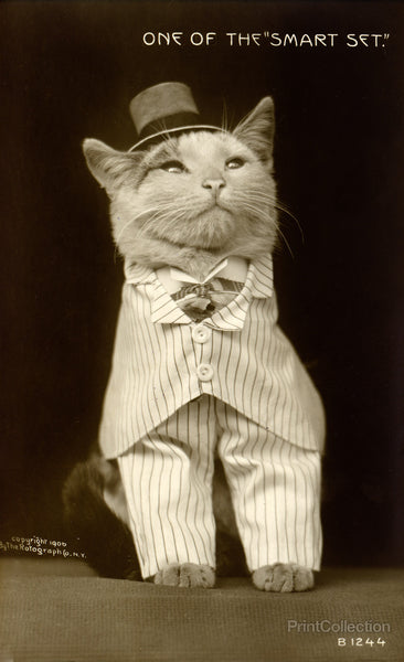 Cat Dressed to the Nines