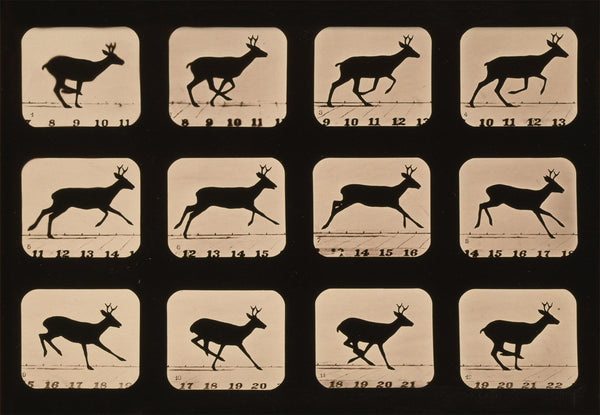 Deer Running, Animal Locomotion