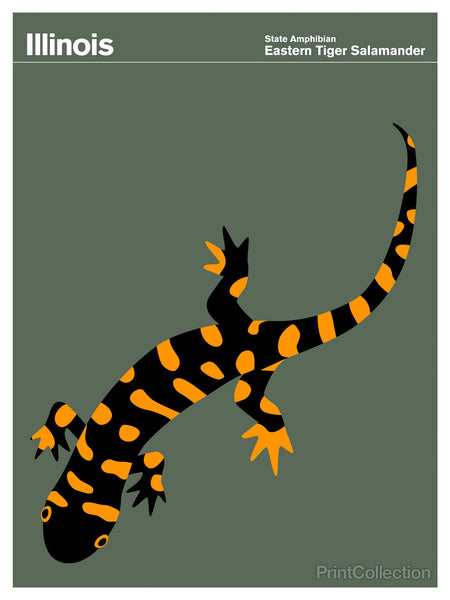 Illinois Eastern Tiger Salamander
