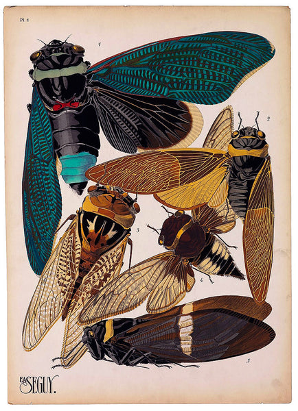 Insects, Plate 1 by E.A. Seguy