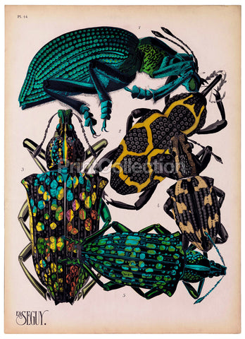 Insects, Plate 14 by E.A. Seguy