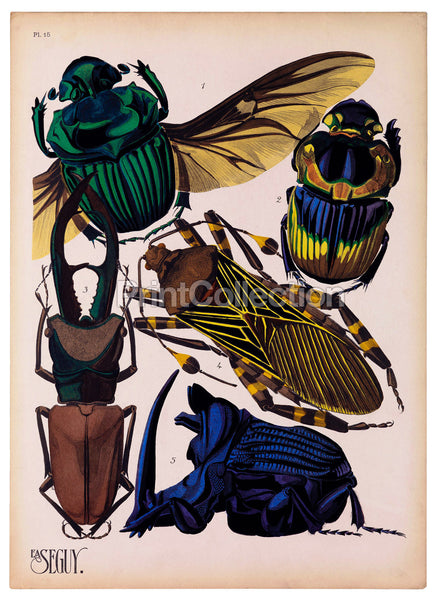 Insects, Plate 15 by E.A. Seguy